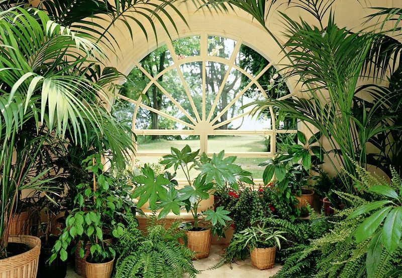 Растения для мансарды